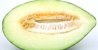 cómo plantar melón